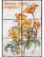 Pannello maiolicato fiori Anemone alpina