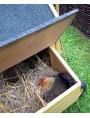 Pollaio mobile su ruote per 6 galline