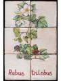 Pannello maiolicato fiori di Rovo