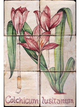 Pannello maiolicato Colchicum lusitanum