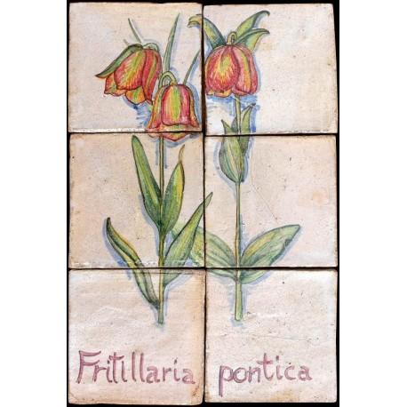 Pannello maiolicato Fritillaria pontica