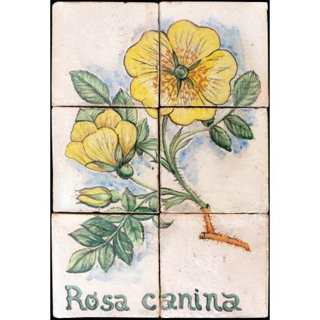 Pannello maiolicato Rosa canina