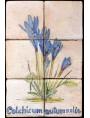 Pannello maiolicato Colchicum autumnalis