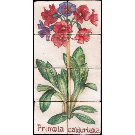 Pannello maiolicato Primula calderiana