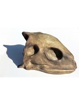 Sea Turtle Skull in terracotta