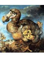 Dodo 1651 painted by Savery