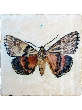 Piastrella di maiolica con Catocala promissa