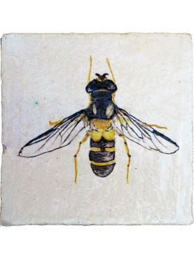 Hand made tile with Leucozona glaucia (Linnaeus 1748)