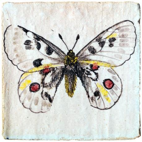 La farfalla apollo piastrella di maiolica