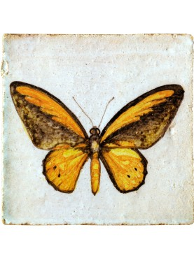 A.R. Wallace butterfly Ornithoptera croesus (Wallace, 1859)