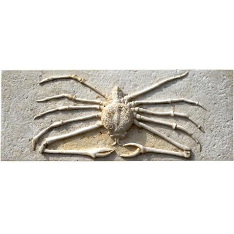 Spider crab work in progress
