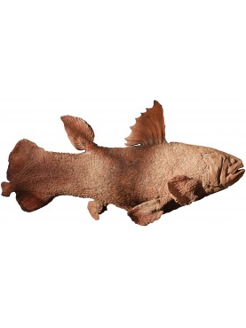 Scultura in terracotta di Coelacantus