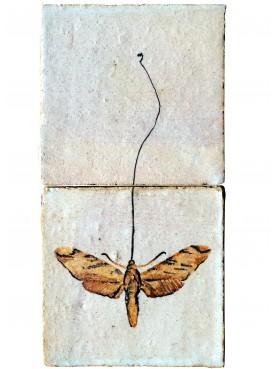 La farfalla di Darwin - Xantophan morgani (Walker, 1856)