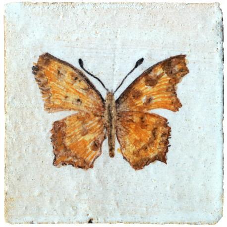 Caper white Belenois java (Sparrman, 1768)