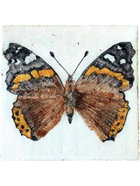 Vanessa atalanta (Linnaeus, 1758)