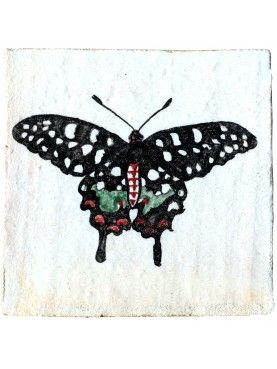 Papilio antenor, Pharmacophagus antenor (Drudy, 1775)