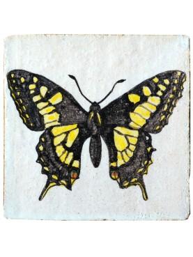 Swallowtail Butterfly, Papilio glaucus (Linnaeus, 1758)