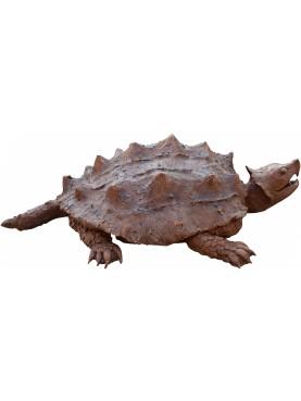 Tartaruga alligatore - Macrochelys temminckii
