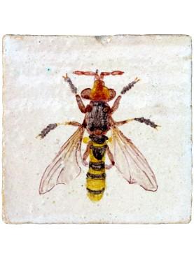 Conopidae - piastrella di maiolica