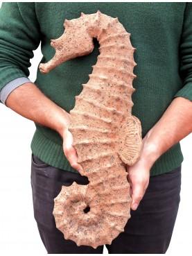 Terracotta Giant Hippocampus