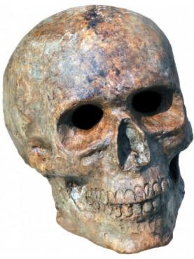 Terracotta skull