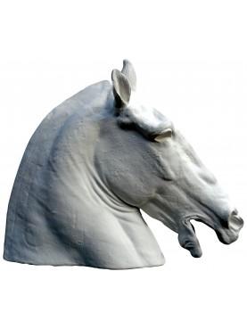 Lisippo's Horse's head - Capitolini Museum Roma