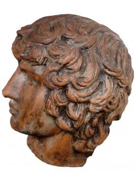Antinoo testa in terracotta