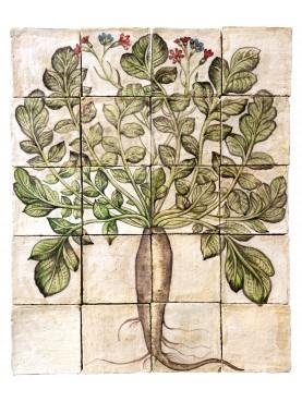 Majolica Panel long black radish - U.Aldrovandi