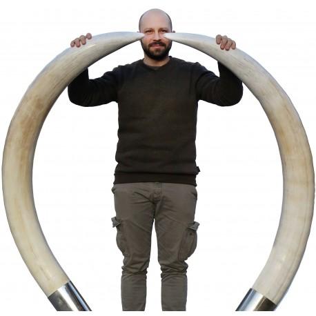 Pair of large elephant tusks