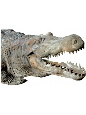 Crocodile terracotta sculpture 1:1 hand made in Italy