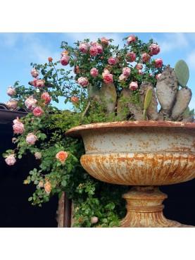 Grande enorme vaso ornamentale mediceo in ghisa