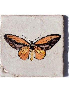 A.R. Wallace butterfly Ornithoptera croesus (Wallace, 1859) majolica tile