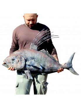 Terracotta fish - Trachinotus carolinus (Linnaeus, 1766) Florida pompano