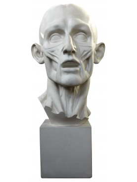 1:1 Head of Flayed Man by Houdon in plaster-cast