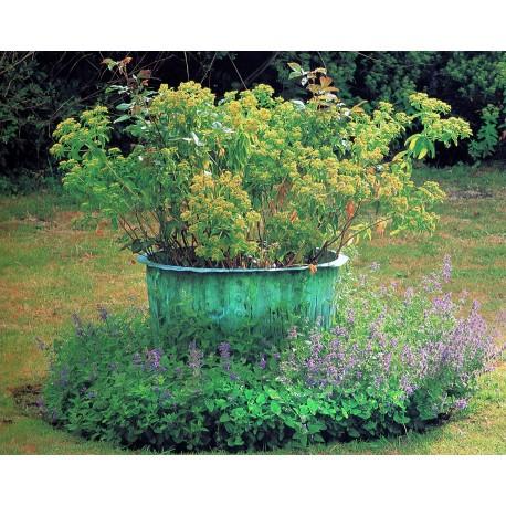 Pubblicata su: Garden Aniques amd Collectibles - Teri Dunn - Friedman/Fairfax Publishers