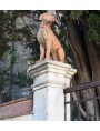 The two dogs of the Certosa di Calci (Pisa)