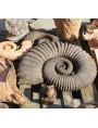 Ammonite heteromorphous sculpture reproduction dark patina
