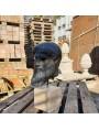 La testa di nostra produzione in terracotta Zeus