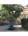 Grande Panchina ottagonale in ferro battuto da albero