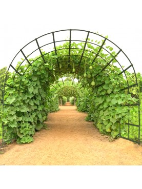 large all-round arch with checked designed for pumpkins