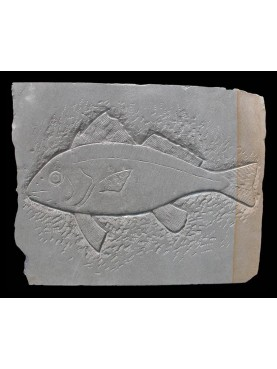 Fish in calcarea stone