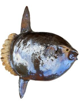 Pesce Luna Oceanico (Mola Mola)