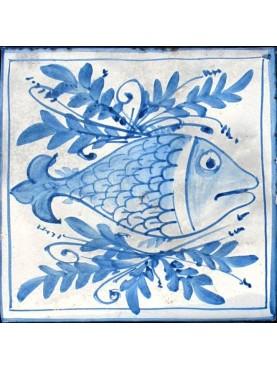 Sarago fish