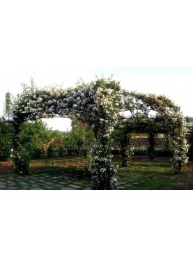 Gazebo 5 x 5 meters for roses or climbing plants