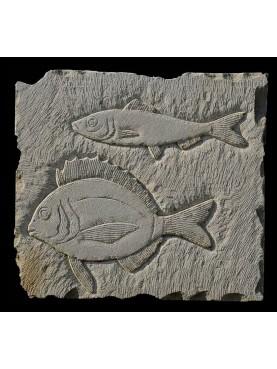 Sand stone fish