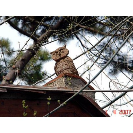 The owl on the roof tile